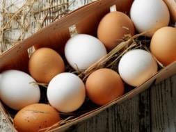 eggs640_253x190.jpg