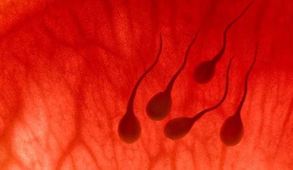 kak-uluchshit-kolichestvo-normalnih-spermatozoidov