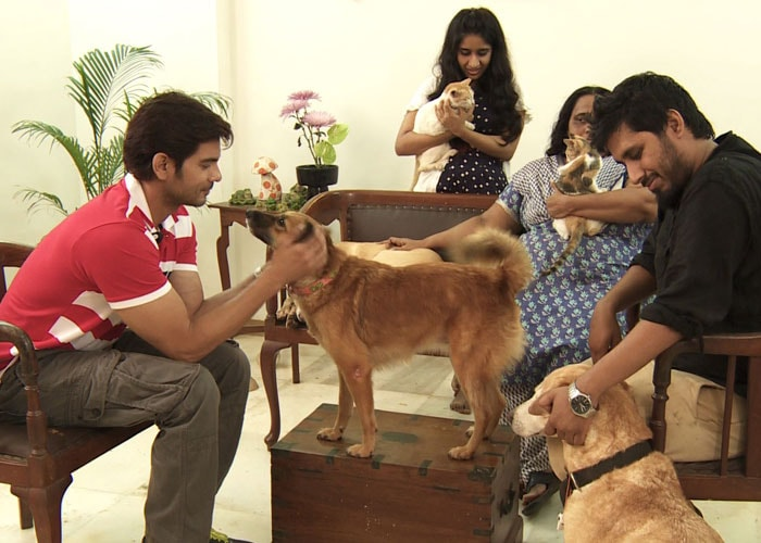 Heavy Petting with the Lalwanis and their pets
