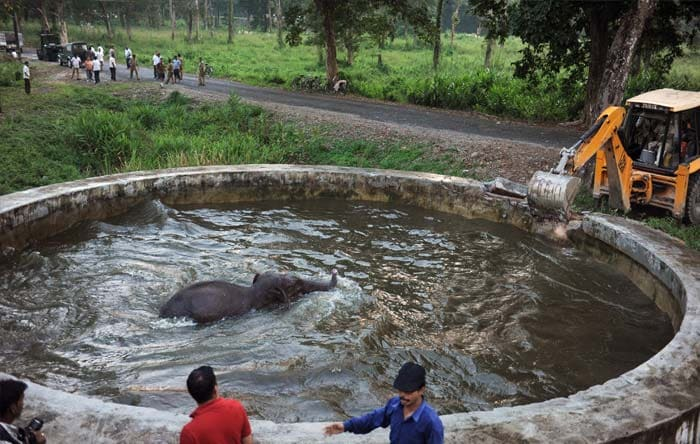 Baby elephant rescued by army from water