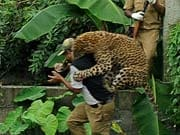 Photo : Caught On Camera: leopard attacks forest guard