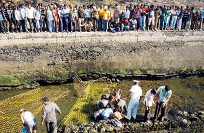 20-hour operation to rescue crocodile near Pune