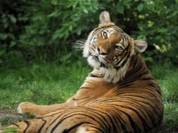 Photo : In Pictures: Save Our Tigers Campaign Impact