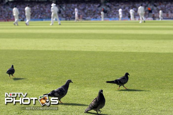 Pigeons walk across the field as England play India in their fourth Test at The Oval Cricket Ground in London. (AP Photo)