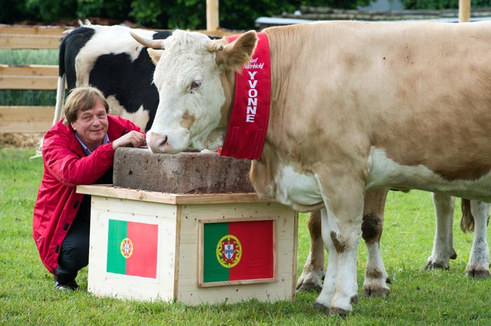 Yvonne the cow had predicted Portugal as the winner against Germany, but the result was just the opposite. (AFP Photo)
