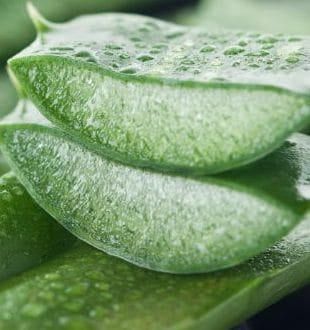 How to Use Aloe Vera to Rejuvenate Your Skin and Hair: 5 Brilliant Ways