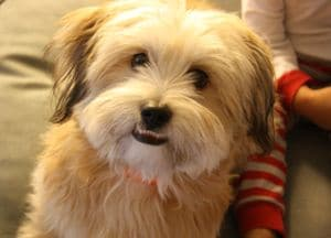 Winner of Pet poll is Benji