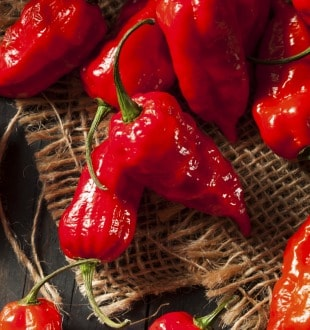 Meet One of the Spiciest Chillies on Planet. Just a Bite is Enough to Get Your Heart Racing!