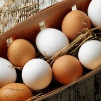 Brown Eggs versus White Eggs: What's the Difference?