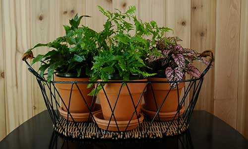 Breathe Clean: 10 Indoor Plants That Improve Air Quality