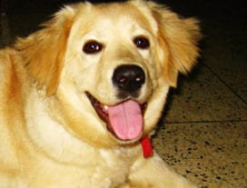 Winner of Pet poll is Lyca