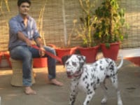 3 beautiful Dalmatians - Sugar, Spice and Cocoa