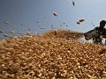 Government Says India's Wheat Stock Position Comfortable