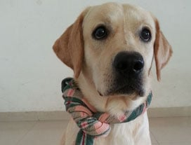 Winner of the Tales & Tails contest is Pranab Sharma from Pune. 
