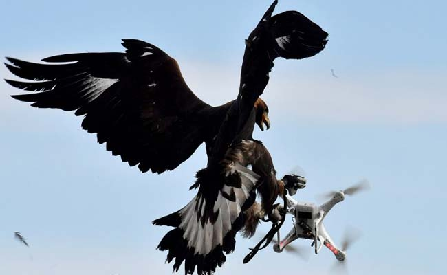 Terrorists Are Building Drones. France Is Destroying Them With Eagles