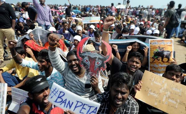 Jallikattu Abandoned In Madurai Amid Protests, Chief Minister On Way To Chennai: 10 Points