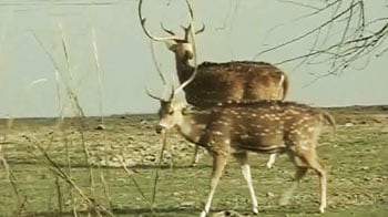 Video : Ranthambore's special animal census