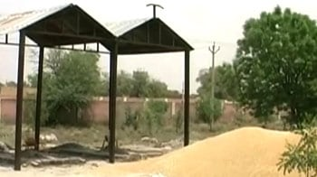 Video : Farmers dump wheat in cremation ground