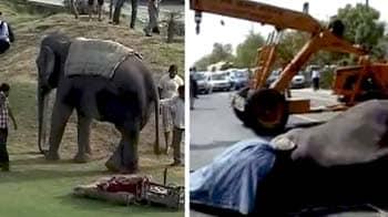 Video : नोएडा एक्सप्रेस-वे पर तेज रफ्तार डंपर ने ली हाथी की जान