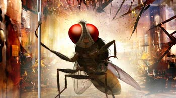 Video : With housefly as its hero, Telugu film <i>Eega</i> has buzzzzz