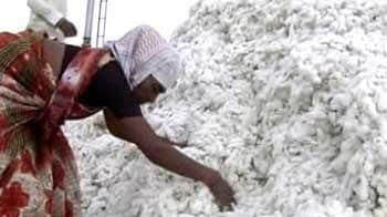 Video : The cotton debt trap