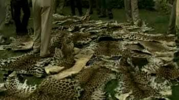 Video : 34 leopard deaths reported in Uttarakhand this year