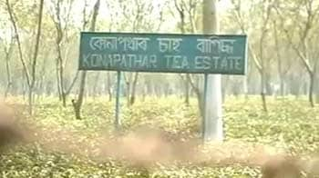 Video : A tea estate, bloodied by murder, waits for answers