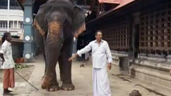 Video : Keith meets temple elephants in Kerala