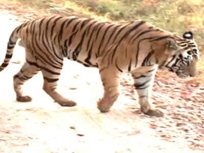 Video : Save our tiger campaign impact