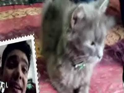 Video : Pet Diaries: Meet the Persian cat - Midnight