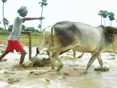 Video : Bihar faces drought-like situation after rainfall deficit