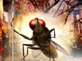 Video : With housefly as its hero, Telugu film Eega has buzzzzz