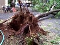 Video: Cyclone Nilam: Surfer video shows trees being uprooted