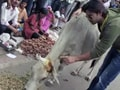 Video: Keith comes to the rescue of stray cattle in Alwar
