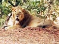 Drought hits animals at the Gir sanctuary