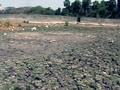 Video : Depleting groundwater in Kerala: Palakkad staring at severe drought