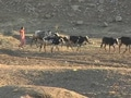 Video : Drought in Maharashtra: natural calamity or self-made?