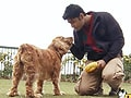 Three amazing dogs give Paras company in Baldeyan