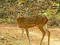 Capturing the myriad moods of the wildlife of Chhattisgarh