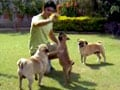 Paras meets 11 dogs named after alcoholic drinks