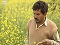Reality Bites:  Of mustard fields and political identity (Aired: February 2002)