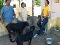 Paras meets the pets of two families in Chennai