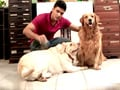 Paras meets a family of fervent animal lovers in Mumbai