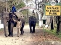 Video : Born Wild: Welcome to Manas (Aired: September 2006)