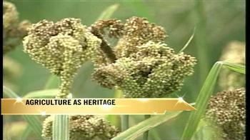 Video : World Environment Day: Agriculture as heritage