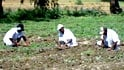 Video : Convicts for organic farming