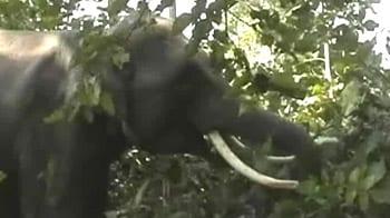 Video : Rishikesh: Elephant on rampage kills three