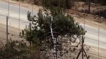 Video : 4 dead in Lebanon-Israel dispute over a tree
