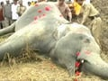 Video : Elephant electrocuted in Assam