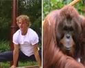 Video: Olympian gymnast to coach orangutans